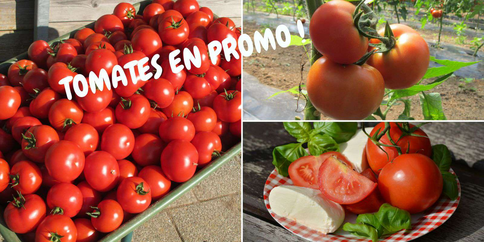 A LA BOUTIQUE :  OPERATION TOMATES